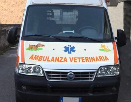 Rif. A109 – Ambulanza usata riadattata uso veterinario
